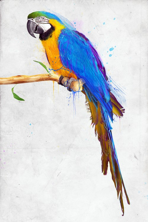 Stunning Colorful Parrot